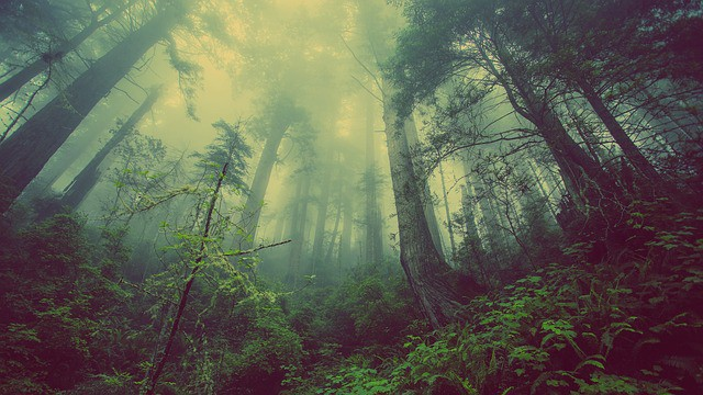 dark forest with green foliage and fog